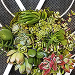 ACCESSORIES: A living succulent wreath